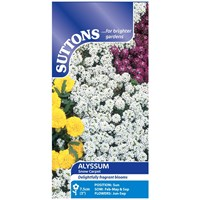 Suttons  Alyssum Snow Carpet Flower Seeds